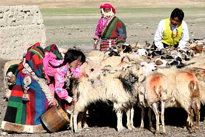 Tibetan shepherds